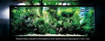 japanese aquarium nature aquariums miyabi aqua design