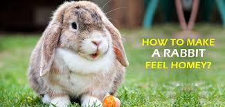 it feels homey how to make a rabbit feel homey flea and tick treatment for pets