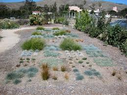 alternatives to grass in backyard alternatives to grass in backyard photo 5 design your home