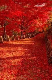 autumn nature pinterest autumn autumn fall and autumn colours