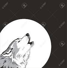 australian shepherd howling howling stock photos royalty free howling images and pictures