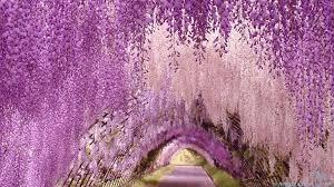 japan flower tunnel unknown world
