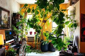 100 best office plants 67 best office plants images on