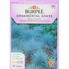 burpee ornamental grass blue fescue seed packet walmart