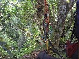 Under Canopy Rainforest by Canopy Blog Canopy Watch International Share The Canopy Save