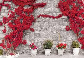 Stone Wall Mural Red Flowers Stone Wall Wall Paper Mural Buy At Europosters