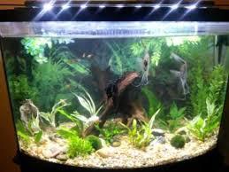 marineland aquatic plant led lighting system w timer 48 60 marineland led 24 plant light 36 gallon tank youtube