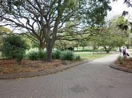 Botanic Gardens Brisbane City Brisbane City Botanic Gardens Picture Of City Botanic Gardens