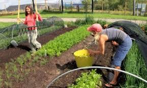 self sustaining garden organic gardens network self sufficient living