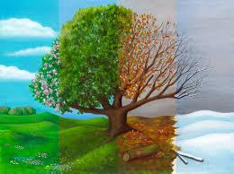 earth has lungs watch them breathe u2013 phenomena curiously