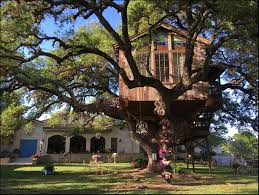 I Have Built A Treehouse - the laurel tree utopia texas