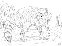 raccoon looking back coloring page free printable coloring pages