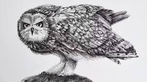 drawing an owl with fountain pen time lapse youtube