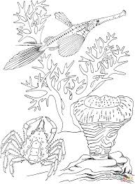 sea crab and trumpet fish coloring page free printable coloring