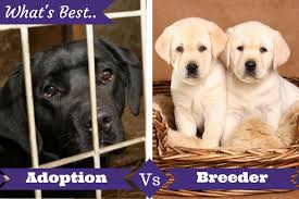 adoption from shelter vs buying from a breeder what u0027s best for you
