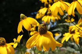 native michigan plants fafardflowers for honey bees