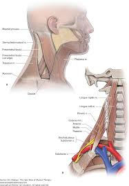 thoracic outlet syndrome the color atlas of physical therapy
