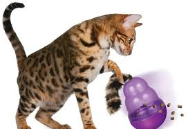 4 must read tips before buying a food dispensing cat petmd