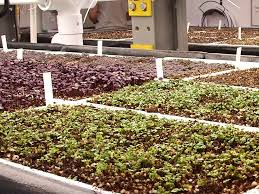 indoor farm grows sustainable produce business insider