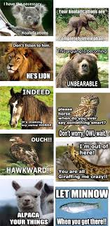 Animal Pun Meme - a full conversation of awesome animal puns jpegy what the