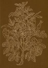 encyclopaedia of garden plants and flowers by roy hay