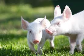 imagenes de animales y cosas 5 cosas que puedes hacer por los animales la vida uve
