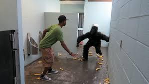 Public Bathroom Meme - gorilla in public bathroom prank viral viral videos