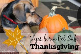 tips for a safe thanksgiving with pets stilwell positively