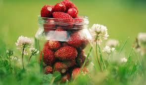fond ecran cuisine fond d écran herbe fruit des fraises bokeh baie fraise fonds