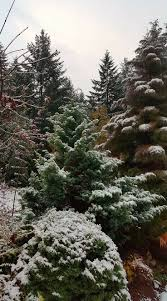 216 best the winter garden images on pinterest winter garden