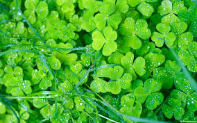 green flowers wallpapers hd pictures u2013 one hd wallpaper pictures