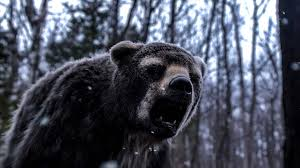 Animal Planet Documentary Grizzly Bears Full Documentaries - ice bridge from dire wolves to giant bears meet the north american