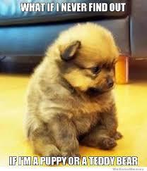 Meme Teddy Bear - teddy bear puppy weknowmemes
