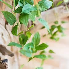 online get cheap wall mount artificial plants aliexpress com