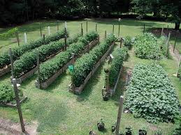 Garden Plot Layout Backyard Vegetable Garden Design Photogiraffe Me