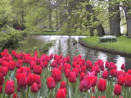 Image Of Spring Flowers by Keukenhof Gardens In The Netherlands Spring Flower Extravaganza