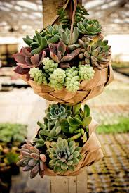 Succulent Gardens Ideas Decorating Succulent Hanging Gardens 20 Awesome Succulents