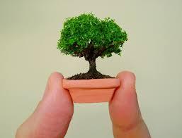 tiny dollhouse bonsai tree in a handmade clay pot by marktduk on