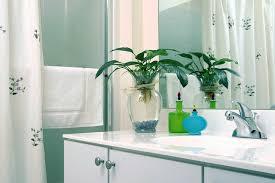 Best Plants For Bathroom Best Houseplants To Filter Toxins In Your Bathroom Mom Foodie