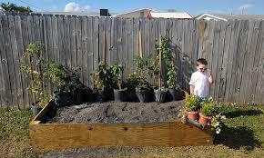Backyard Raised Garden Ideas Initial Planting Of Our Raised Backyard Vegetable Garden