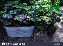 sles of garden decor with ornamental vase outdoor in the