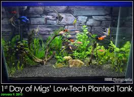 10 gallon planted tank led lighting migs hernan 20 gallons your tanks