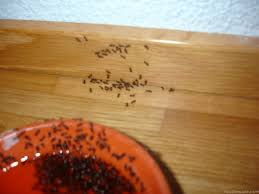 ameisen k che kleine ameisen in der kche schone ideen home design inspiration