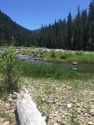 Wetland Resources Of Washington State by Environmental U0026 Ecosystem Sciences Of The