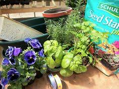 Indoor Vegetable Container Gardening - plant a container garden follow this easy guide it u0027s not too