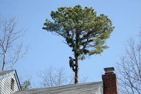 phillips tree service phillips tree service