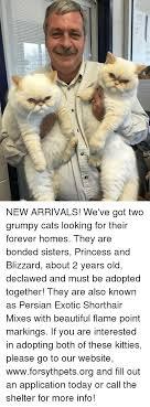 Grumpy Cat New Years Meme - 25 best memes about grumpy cat meme grumpy cat memes