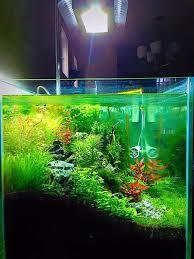 Aquascape Inspiration 278 Best Aquascaping Inspiration Images On Pinterest Aquarium