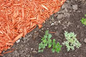 Best Type Of Mulch For Vegetable Garden - 9 organic mulch materials regenerative com