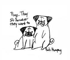 bah humpug sit pug sit good pug